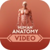 Human Anatomy for Beginners anatomy