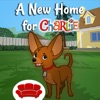 A New Home for Charlie the Chocolate Chihuahua