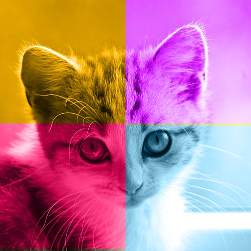 Kittens vs. You - Free Trivia and Quiz Game for Kittens of All Ages iOS App