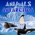 Animali Antartide icon