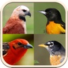 Non-Passerine Bird Guide with Bird Image Quiz and Facts
