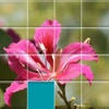 Orchids Sliding Jigsaw