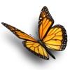 TLD Butterfly