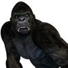 Gorilla 3D