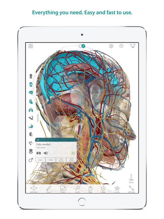 Human Anatomy Atlas – 3D Anatomical Model of the Human Body Av ...