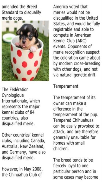 Yo Quiero Chihuahua review screenshots