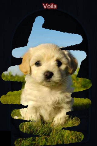 A Dog game to scratch Hidden Pics - Mini game for Kids - Playing cool breed games - animal best dogs pics screenshot 3