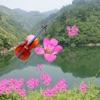 小提琴名曲欣赏 85 Violin Songs [雪峰音乐]