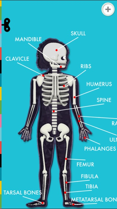 The Human Body by Tinybop Screenshots