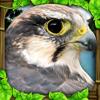 Falcon Simulator Wiki