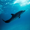 Dolphin Sounds - Ringtones, Alarms and More All High Quality