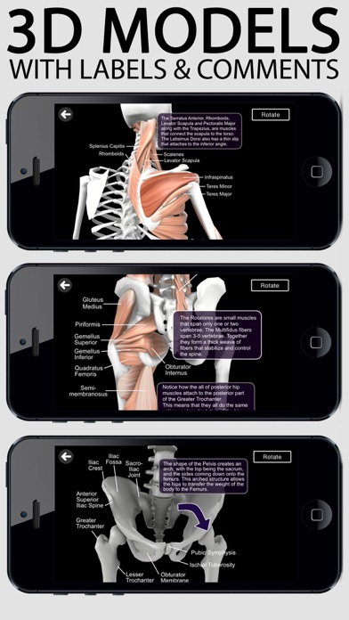 Learn Muscles : Anatomy Quiz & Reference Screenshot