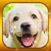 Magic Puzzles - Pet Jigsaw Puzzle Games for Free
