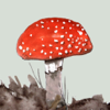 Mushrooms & Toadstools UK - An iSpiny Guide Wiki