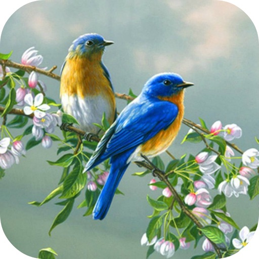 Birds Wallpaper & Singing Birds Background Sound iOS App