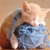 Cat Catch Wool Ball —— very cute game!
