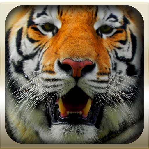 Epic Animal Hunter 3D 2016 Pro : Wild Jungle iOS App