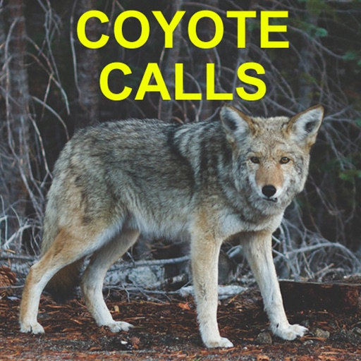coyote calls for coyote hunting par guidehunting l l c. Black Bedroom Furniture Sets. Home Design Ideas