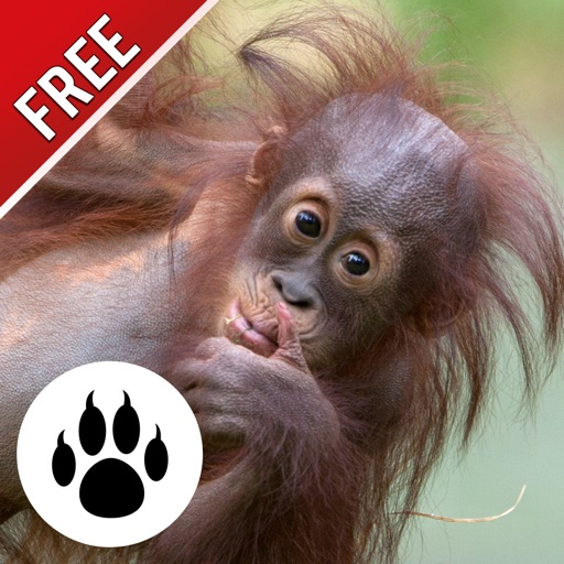 Forest & Jungle Animals Puzzle : Logic Game Free iOS App