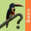 Costa Rica Birds Field Guide Basic