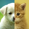 Cats & Dogs Wallpapers HD - Cute Puppies & Kittens