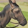 Horse Simulator 2017