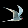 Fågelguiden