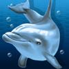 Дельфин клуб